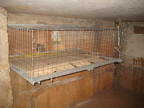 Вподвалах домов вЧелнах установят клетки для обогрева кошек