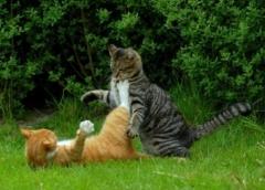 Новости  - Кошачья фотобитва «Мартовской кот» выходит на финишную прямую