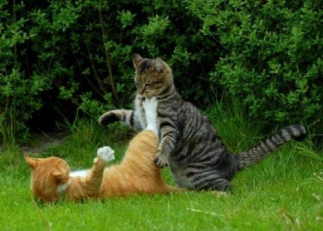 Кошачья фотобитва «Мартовской кот» выходит на финишную прямую