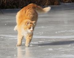 Новости  - В Татарстане ожидается сильная гололедица