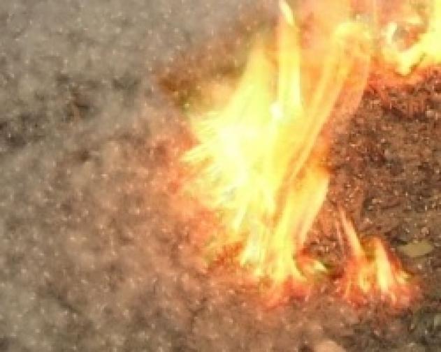 Новости  - Тополиный пух горит – июнь!