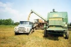 Новости  - Уборка зерновых в Татарстане затягивается на целый месяц