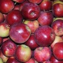 Новости  - После засухи  деревья начали массово сбрасывать плоды