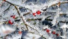 В Татарстан приходит сильное похолодание