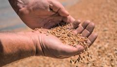Новости  - По итогам первого полугодия в Татарстане выявили 18,7 тыс. тонн некачественного зерна