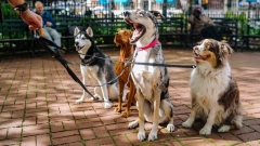Новости  - Завтра мобильный пункт вакцинации и стерилизации животных приедет в поселок Аракчино