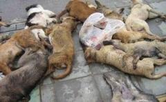 Новости  - В Елабуге собак со щенками расстреляли на глазах детдомовцев