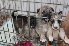 Новости  - Собачий приют в Столбищах просит помощи