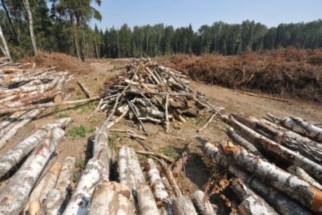 ВСМ «Москва–Казань–Екатеринбург» уничтожит тысячи гектаров лесов Татарстана
