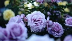 На оформление цветами потратят более 50 миллионов рублей