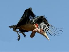 Новости  - Депутат Госдумы РФ подарил казанскому зооботсаду птицу за полмиллиона рублей
