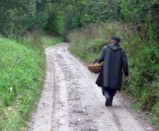 В Татарстане потерялись еще 11 грибников