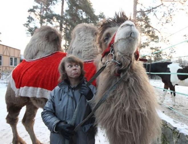 Казанцы на аграрном празднике смогут покататься верхом на верблюде и выиграть теленка