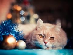 Новости  - Кот и Новый год
