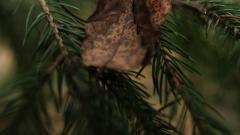 Новости Общество - Жители Казани смогут сдать ели на корм животным