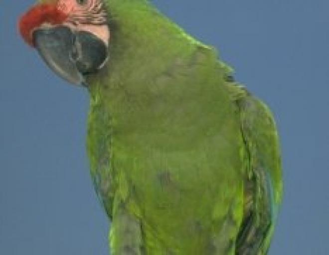 Как правильно ухаживать за попугаем