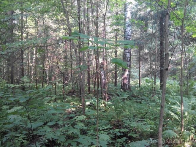 Профессора, потерявшегося в лесу, перестали искать