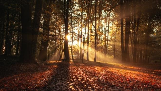 По России ожидается аномально теплая середина октября