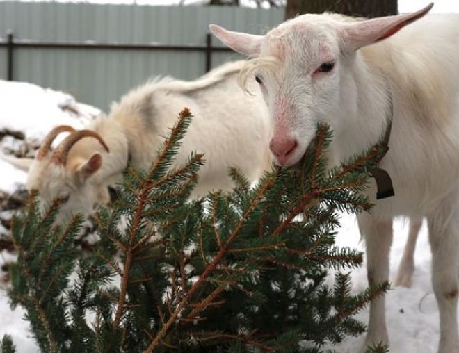 Жителям Казани предлагают утилизировать елки
