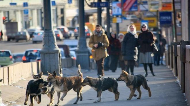 В Набережных Челнах правозащитники добились отмены тендера на отлов животных