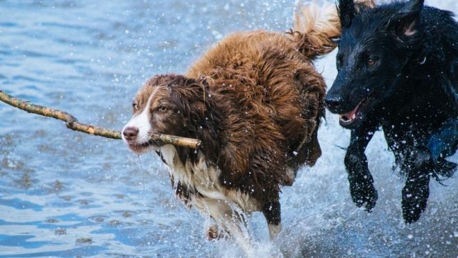 Завтра в поселке Отары собак будут прививать и стерилизовать бесплатно