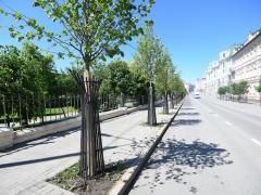 Новости Общество - В столице республики посадили 7,6 тыс. деревьев разных пород