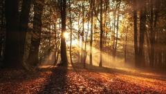 Новости  - В России ожидают теплую осень