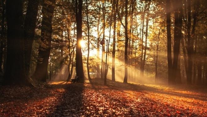 В России ожидают теплую осень