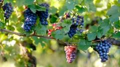 Новости Экономика - Акцизы на алкоголь могут вырасти: вино может подорожать