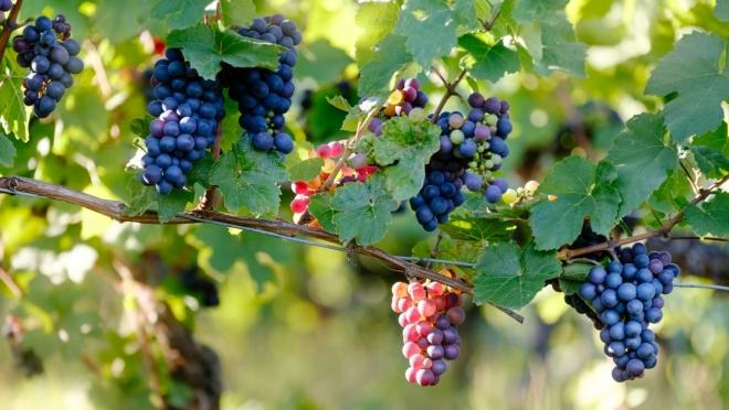 Акцизы на алкоголь могут вырасти: вино может подорожать