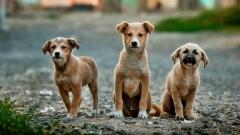 Новости  - В Альметьевском районе откроют приют для бездомных животных