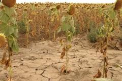 Новости  - Аномальная жара в Татарстане начнет спадать 29 июня