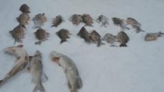 В Татарстане задержали браконьеров за ненадлежащую ловлю рыбы