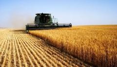 Новости Экономика - Регионам выделено шесть млрд рублей на развитие сельских территорий