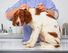 Новости  - В Казани чипировали 476 домашних собак и кошек