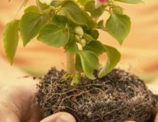 Комнатные растения — отличное украшение интерьера и оригинальный подарок
