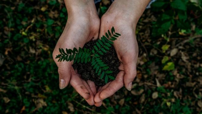 Новости  - В столице республики посадили 7,6 тыс. деревьев разных пород