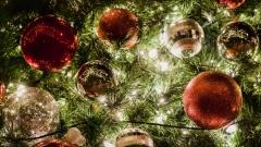 Новости  - Пункты приема новогодних елок откроются в регионе