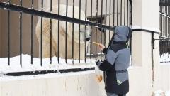 Новости Общество - В зоопарке Казани появился медведь Терпей