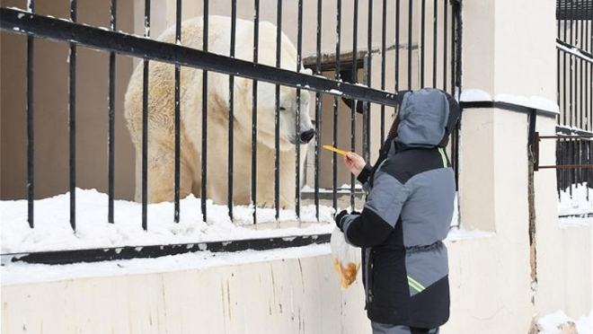 В зоопарке Казани появился медведь Терпей