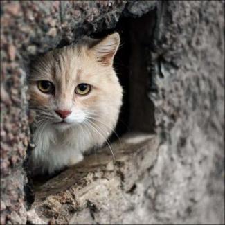 В Казани пройдёт акция-выставка бездомных кошек «Дорога домой»