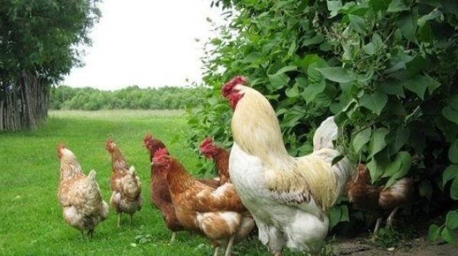 29 сентября в Пестрецах пройдет яичный фестиваль