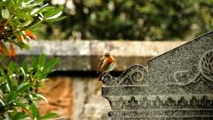 Новости  - Вдоль трассы М-7 откроется новое кладбище