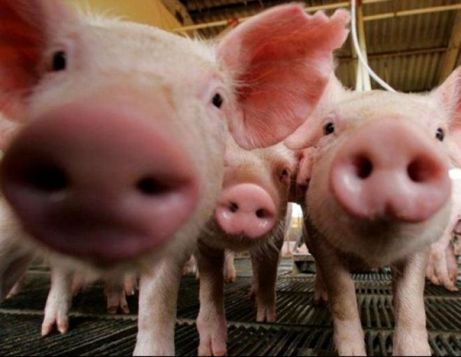 Российских фермеров предлагают штрафовать за отказ от вакцинации домашних животных