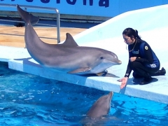 Новости  - Татарстанцы могут подписать петицию против шоу «Вместе с Дельфинами» на Первом канале