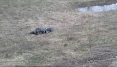 Новости  - В Тюлячинском районе Татарстана насмерть разбился байкер