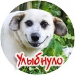 Новости  - Казанцы выбрали самого улыбающегося горожанина
