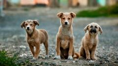 Новости Общество - К концу года Госсовет примет новый закон о бездомных животных
