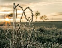 Новости  - По Татарстану ударят морозы: температура воздуха опустится до -7 градусов