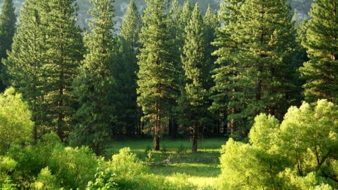 В Татарстане высадят миллионы саженцев для восстановления лесов